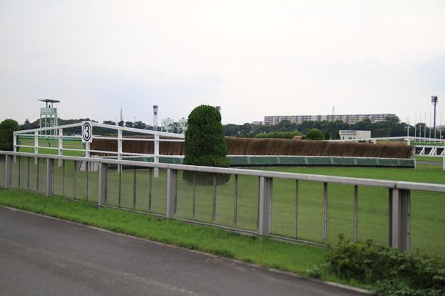 Photos: 芝コース馬場解放_4(13/06/23・東京競馬場)