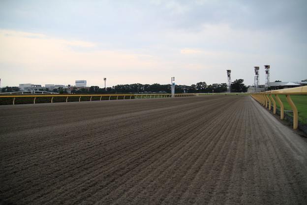 Photos: ダートコース馬場解放(13/06/23・東京競馬場)