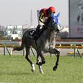 Photos: ツィンクルソード 返し馬1(クロッカスステークス)