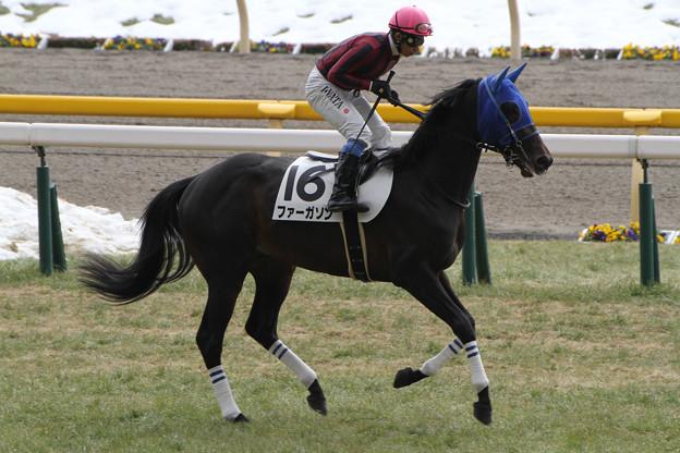 Photos: ファーガソン 返し馬