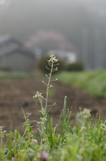 朝の野の花