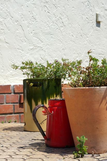 植木鉢占拠中