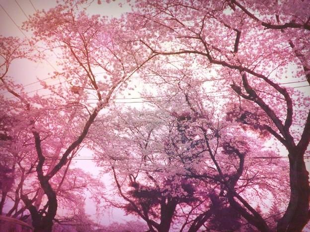 綺麗の画像 p1_40