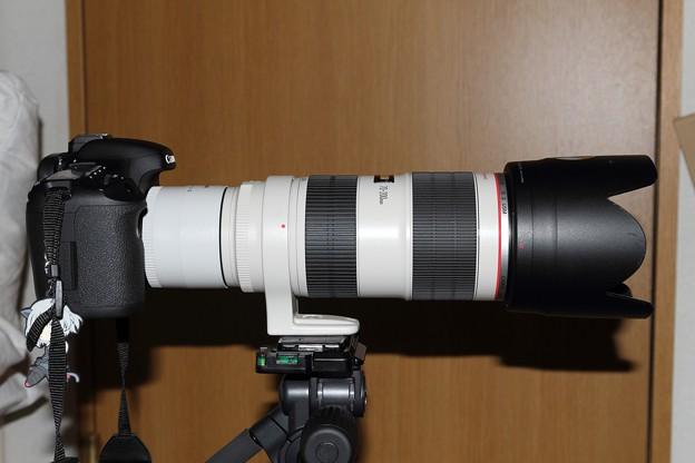 Photos: 7D+EF2×III+70-200mmf/2.8L-IS-II-USM-1