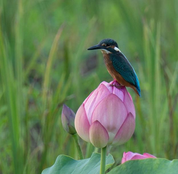 ひまわり #湘南 #鎌倉 #kamakura #花 #flower #mysky - 写真共有サイト