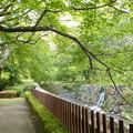 Photos: 近くの川