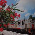 Photos: マレー鉄道「ティムラン号」