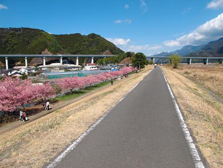 美和桜2014-4