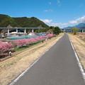 写真: 美和桜2014-4