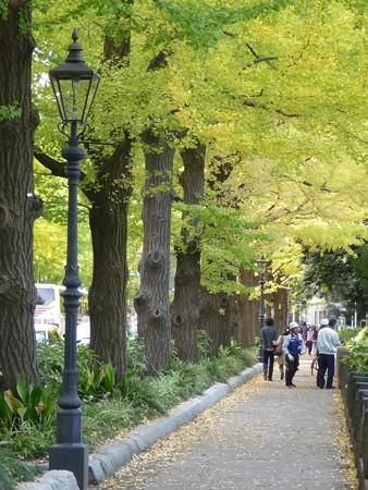 121115-紅葉 山下公園通り (14)