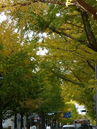 121115-紅葉 山下公園通り (23)