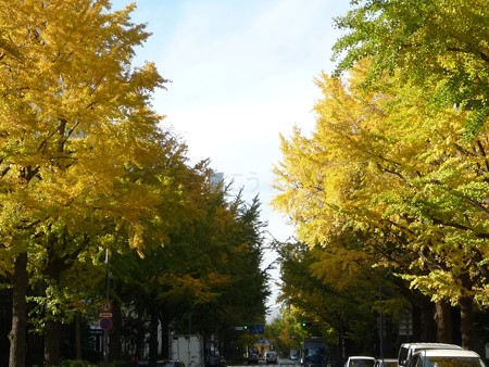 121115-紅葉 山下公園通り (24)