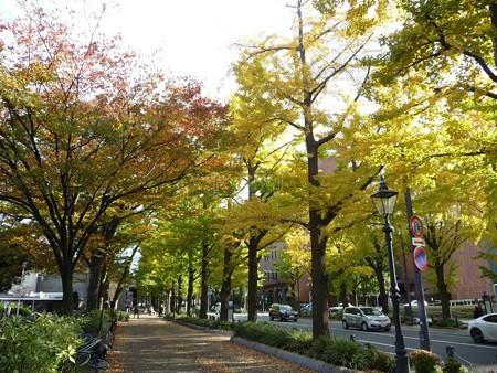 121115-紅葉 山下公園通り (36)