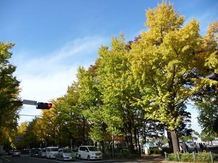 121115-紅葉 山下公園通り (44)