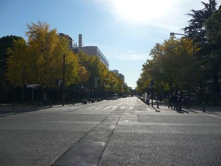 121115-紅葉 日本大通り・県庁 (9)