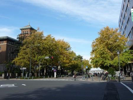 121115-紅葉 日本大通り・県庁 (14)