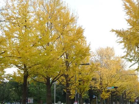 12.11/29 紅葉 山下公園通り (25)