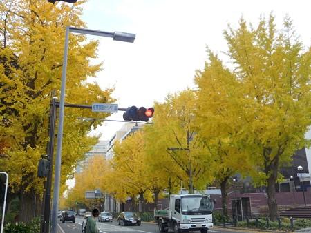 12.11/29 紅葉 山下公園通り (36)