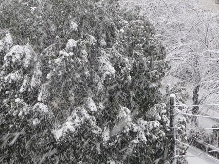130114-雪 (4)