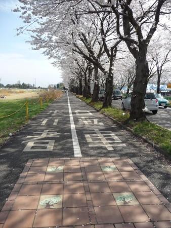 130328-海軍道路 (72)