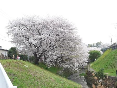 130329-大和 千本桜 (1)