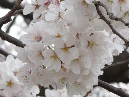 130329-大和 千本桜 (53)