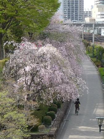 130404-川口の桜 (2)