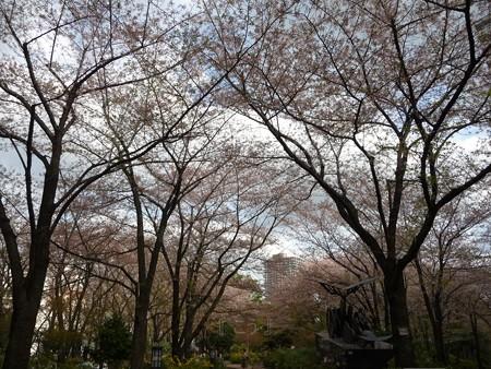 130404-川口の桜 (15)