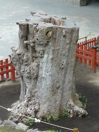 130619-八幡さま (12)