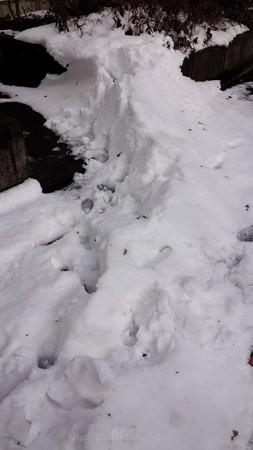 140209-雪 (3)