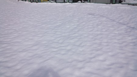 140209-雪 (7)