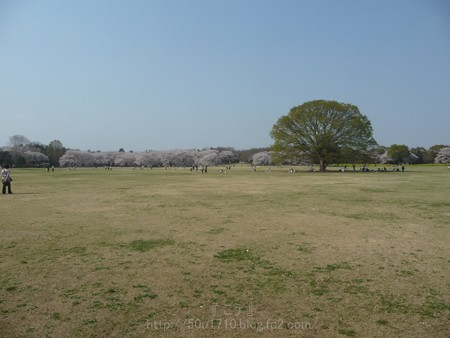 140408-昭和記念公園 (14)