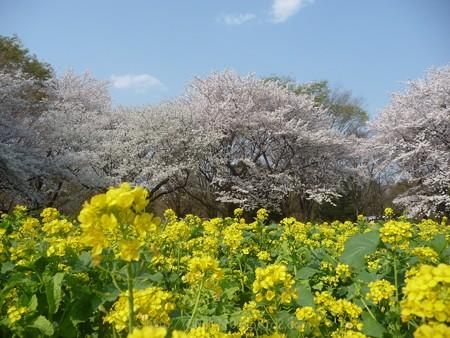 140408-昭和記念公園 (50)