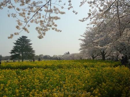 140408-昭和記念公園 (66)