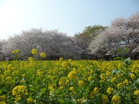 140408-昭和記念公園 (73)