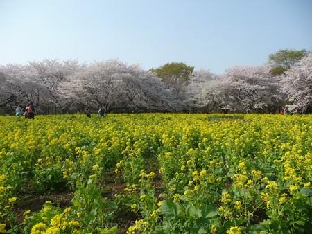 140408-昭和記念公園 (84)