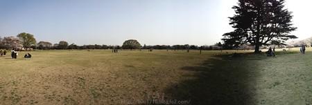 140408-昭和記念公園 パノラマ (2)