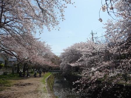 140407-千本桜 (32)