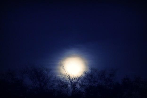 朧月夜に。。。