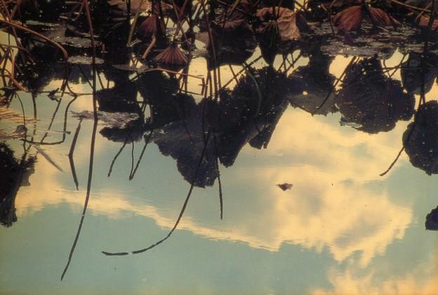 ,池面に映る白い雲