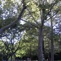 公園の午後1