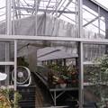 シクラメン栽培農家の温室の換気