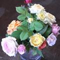 写真: 真夏のバラ切り花