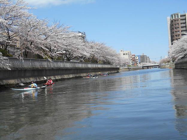 カヌーで桜を楽しむ人たち