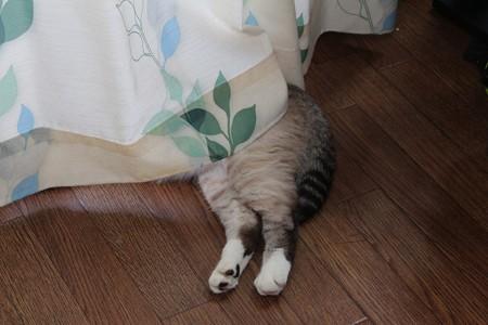 おいしそうな脚