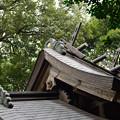 Photos: 出雲詣でDSC_2375