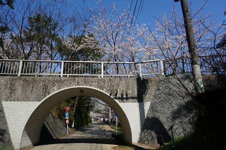 【さくら満開 写真】西公園 桜 福岡 2014年3月28日撮影 (49)