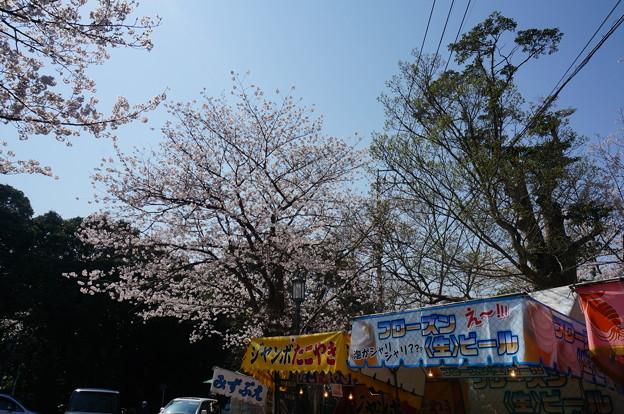 【さくら満開 写真】西公園 桜 福岡 2014年3月28日撮影 (76)