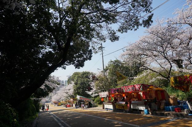 【さくら満開 写真】西公園 桜 福岡 2014年3月28日撮影 (80)
