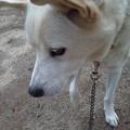 Photos: 我が家の犬のアーサーも11歳